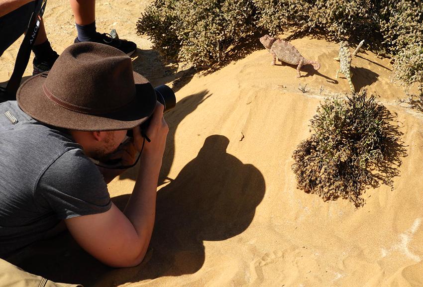 Gecko, Namib-Wüste