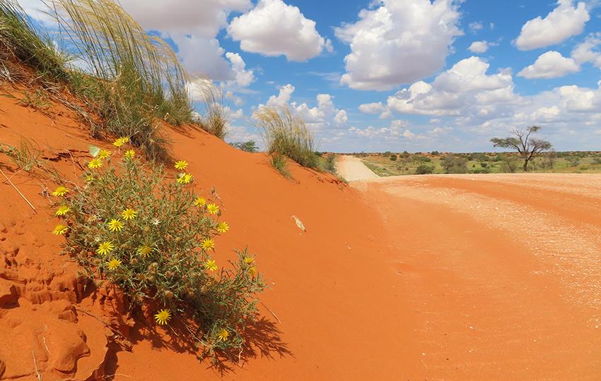 Schotterstraße Kalahari