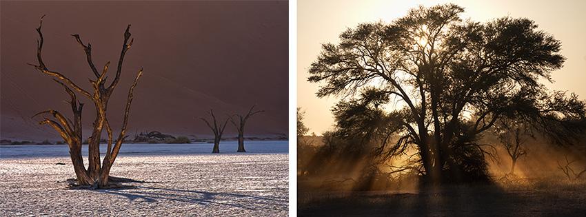 Bäume in Namibia