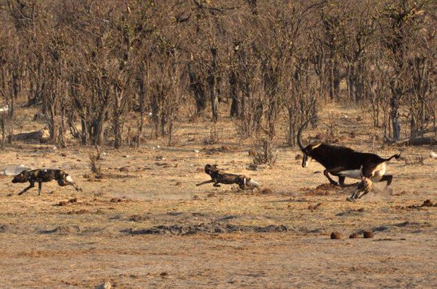 Namibias reiche Tierwelt