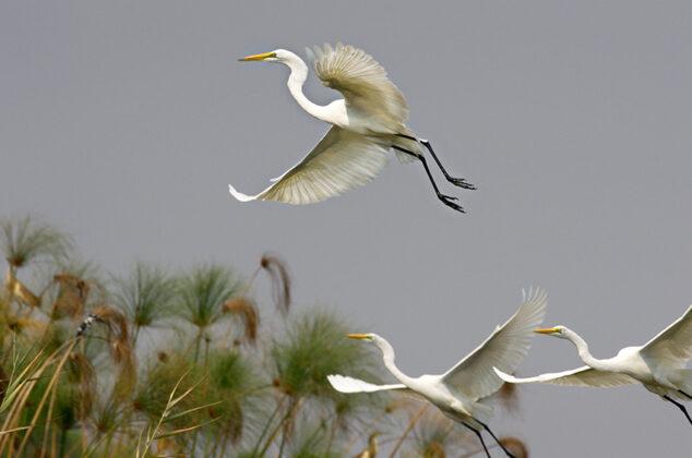 Namibias Vogelwelt