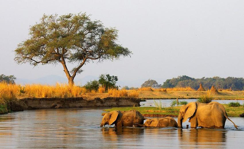 Elefanten, Sambesi-Region