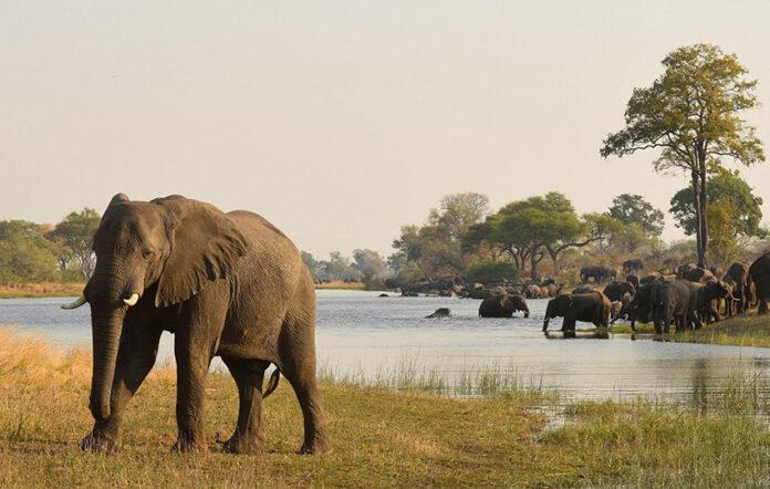 Elefanten, Bwabwata Nationalpark